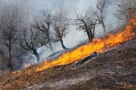 آتش سوزی در جنگل های روستای سرخگریوه